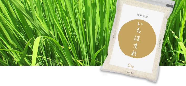 この命名には、「日本一(いち)美味しい、誉れ(ほまれ)高きお米」となってほしいという思いが込められています。