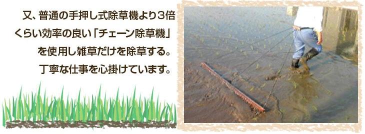 チェーン除草機を使用し雑草だけを除草する丁寧な仕事を心がけています。