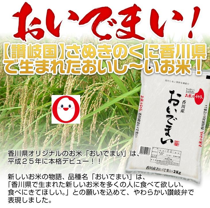【讃岐国】さぬきのくに香川県で生まれたおいし〜いお米!おいでまい