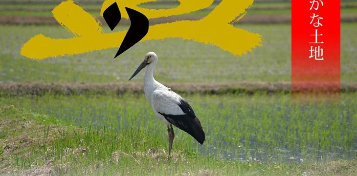 コウノトリが飛び交う自然豊かな土地