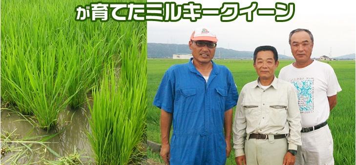 生産者指定 農事組合法人夢ふく さんが育てたミルキークイーン