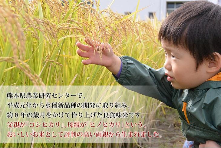 コシヒカリとヒノヒカリという美味しいお米として評判の高い両親から生まれました
