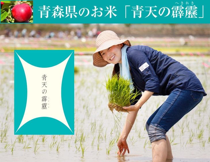 青森県のお米「青天の霹靂」