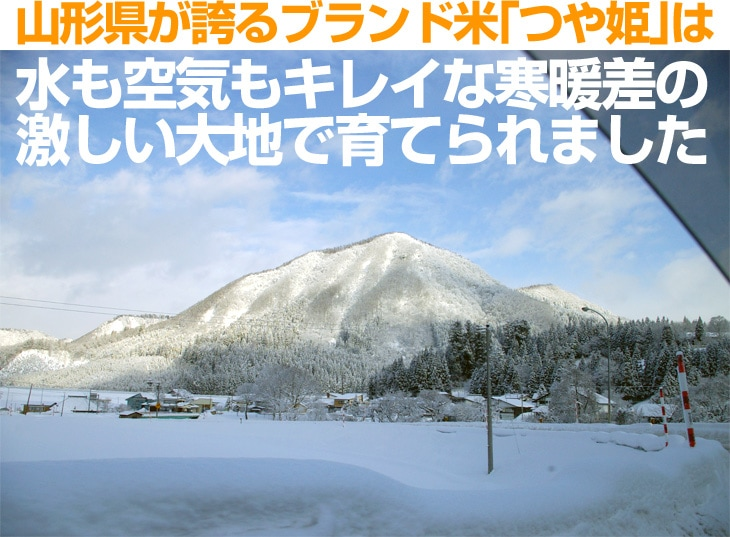 山形県が誇るブランド米「つや姫」は水も空気もキレイな寒暖差の激しい大地で育てられました!