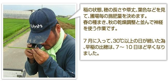 稲の状態、穂の長さや草丈、葉色などを見て、圃場毎の施肥量を決めます。春の種まき、秋の乾燥調整と並んで神経を使う作業です。7月に入って、30℃以上の日が続いた為、早稲の出穂は、7〜10日ほど早くなりました。