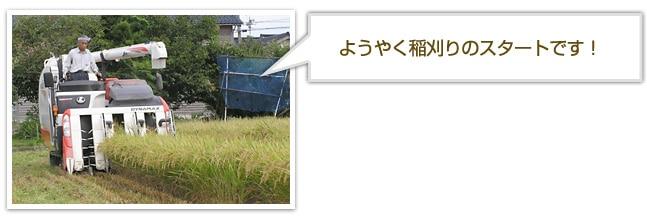 ようやく稲刈りのスタートです。