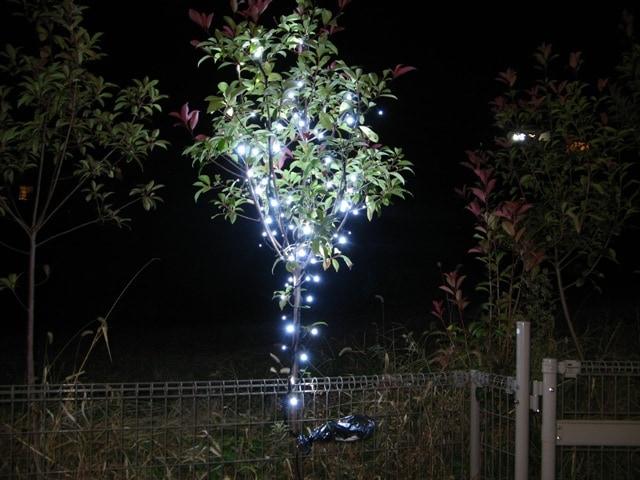 余剰分で庭木1本をイルミネーション