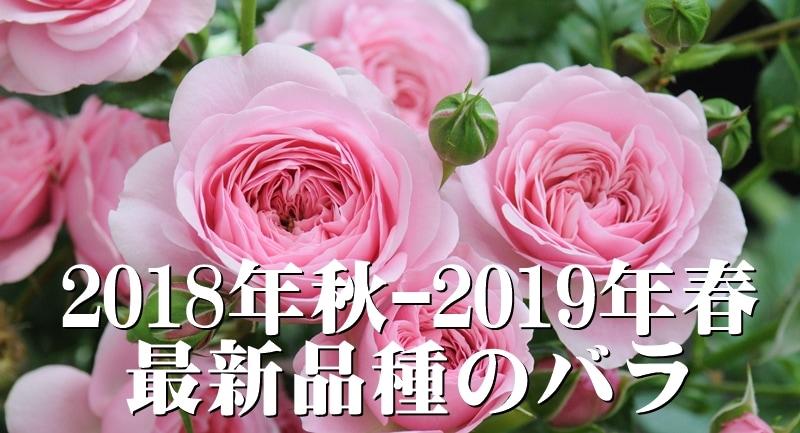 20188秋-2019春 最新品種のバラ
