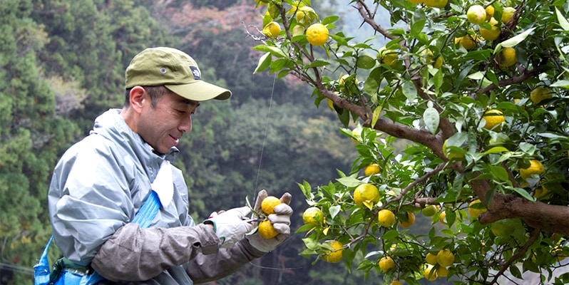 木頭ゆずが鮮やかな色合いを持ち、香りが優れる理由