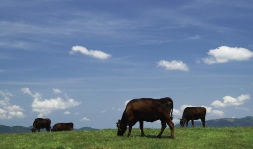 滋賀の豊かな大地と自然の水で育った近江牛