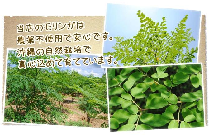 農薬不使用栽培で安心。沖縄の自然栽培