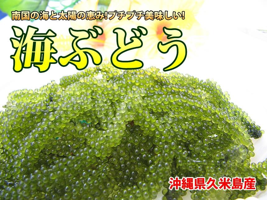 ぶどう 海 海ぶどう/海葡萄/ウミブドウ/クビレズタ:旬の野菜百科