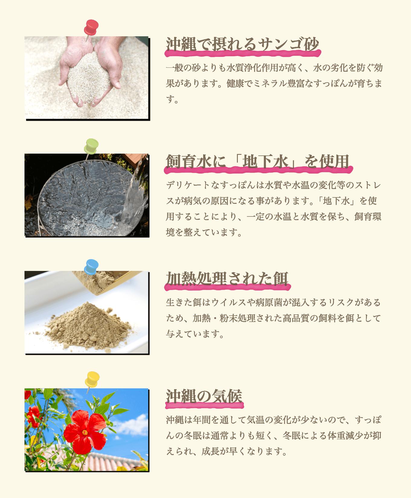 珊瑚砂、地下水、餌、気候