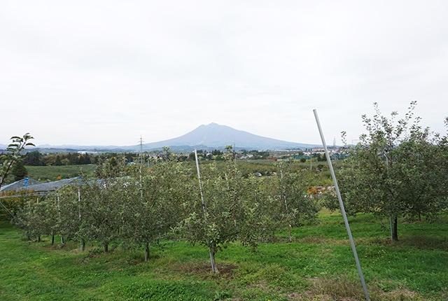りんご畑を見下ろす岩木山