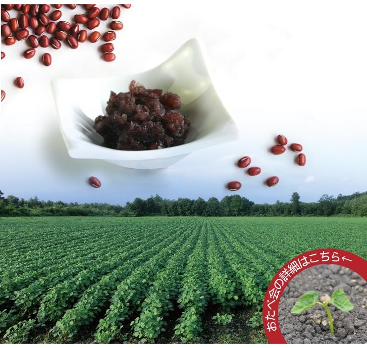 おたべ会:北海道小豆チーム おたべの「つぶあん」の原料小豆 おたべ会についての詳しくはクリック