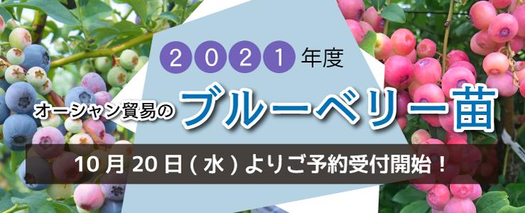 2021年ブルーベリー苗販売