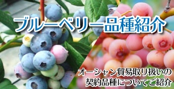 ブルーベリー品種紹介