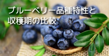 ブルーベリー品種特性と収穫期の比較
