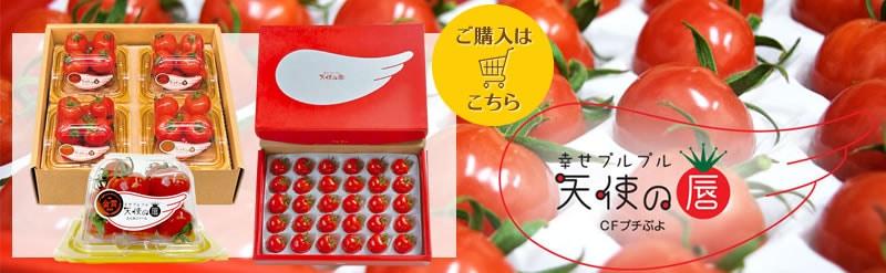 天使の唇 ミニトマト トマト