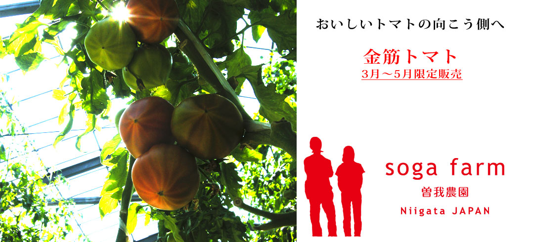 曽我農園 金筋トマト出荷開始!3〜5月の限定販売