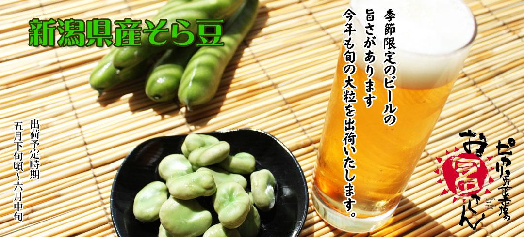新潟産そら豆は旬がうまい!