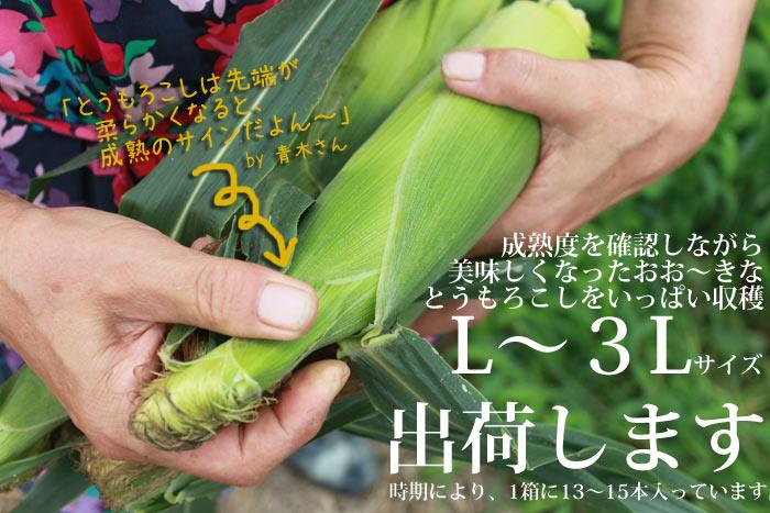 生産者の青木さんが作った自家製アミノ酸有機肥料を使用し、農薬は止むを得ない最小限のみ使う減々農薬栽培で育てたスイートコーン