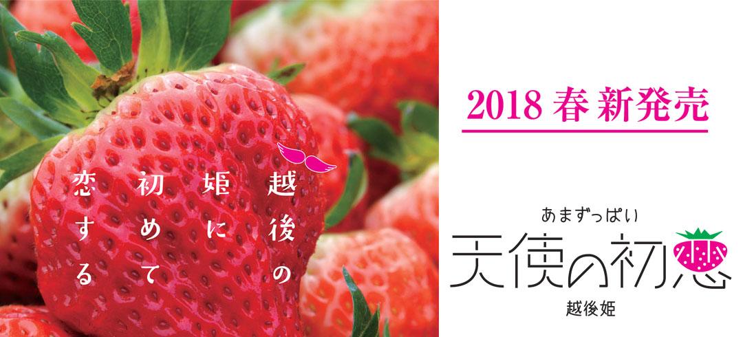 2018年新発売!4L、3Lサイズの限定越後姫「天使の初恋」