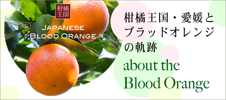 ブラッドオレンジ特集TOP