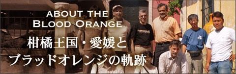 ABOUT THE BLOOD ORANGE 柑橘王国・愛媛とブラッドオレンジの軌跡