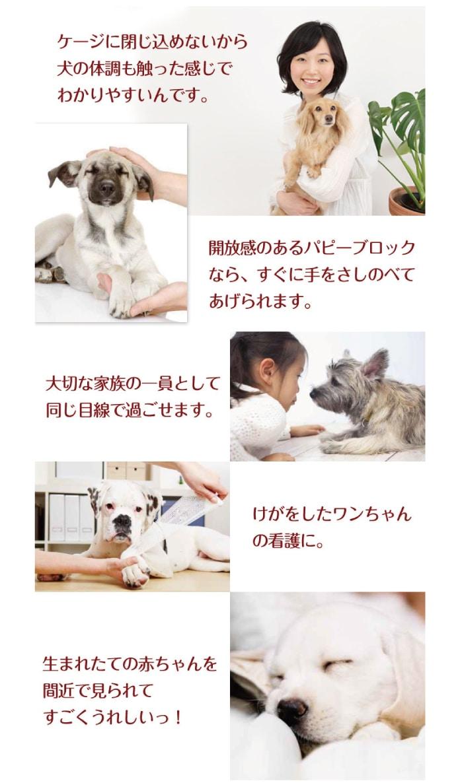 ケージに閉じ込めないから、犬の体調も触った感じでわかりやすいんです
