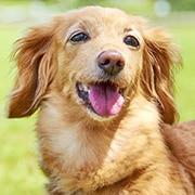 犬種から選ぶ