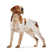 中型犬(成犬時体重11kg〜25kg)