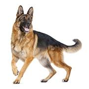 大型犬(成犬時体重26kg〜44kg)