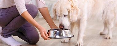 ペットの健康を守るための最適な栄養バランス