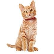 子猫(キトン・12か月まで)