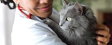 獣医師との緊密な連携
