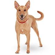 成犬(アダルト・1〜6歳)