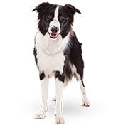 高齢犬(シニア・7歳から)