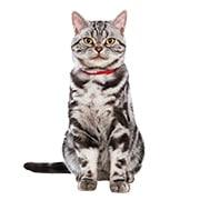 高齢猫(シニア・7歳から)