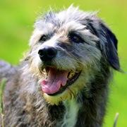 高齢犬(シニア)用のフードを選ぶ