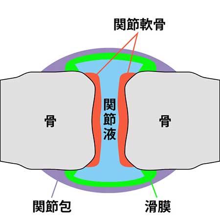 緑イ貝タブ関節への栄養補強イメージ