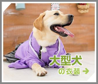 大型犬の衣装