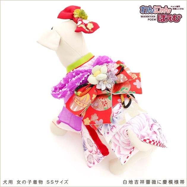 小型犬 kssr-008 白地吉祥薔薇に慶模様帯