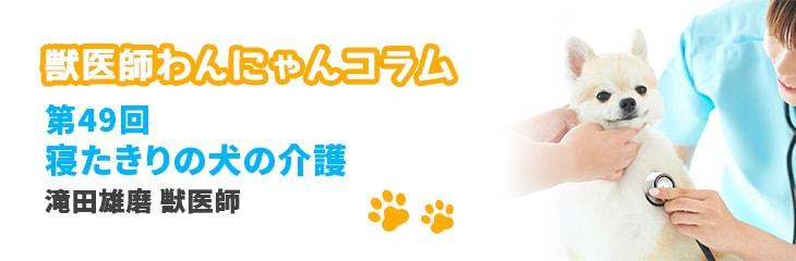 第49回 寝たきりの犬の介護