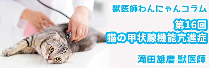 第16回 猫の甲状腺機能亢進症