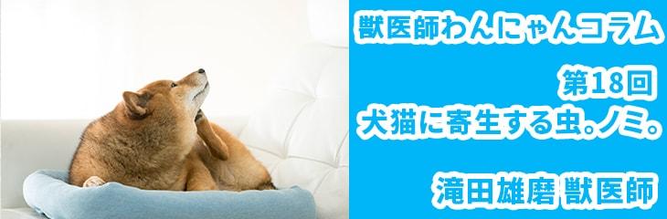 第18回 犬猫に寄生するノミ