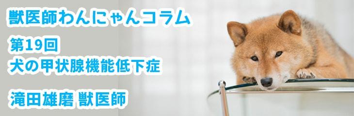第19回 犬の甲状腺機能低下症