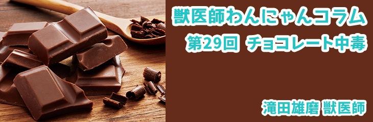 第29回 チョコレート中毒