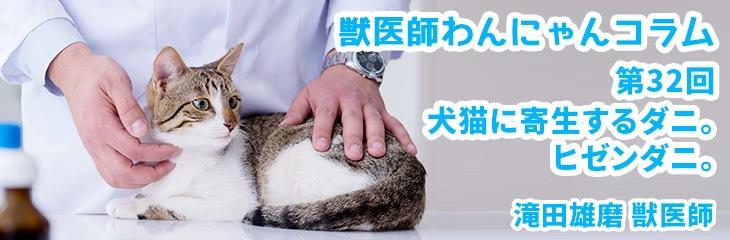 第32回 犬猫に寄生するダニ。ヒゼンダニ。