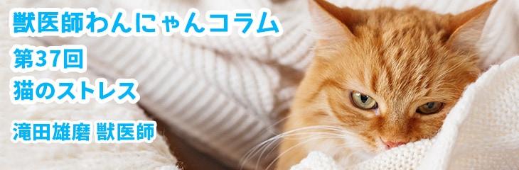 第37回 猫のストレス